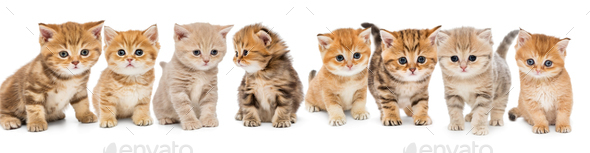 Portraits of a large group of small kittens - Stock Photo - Images