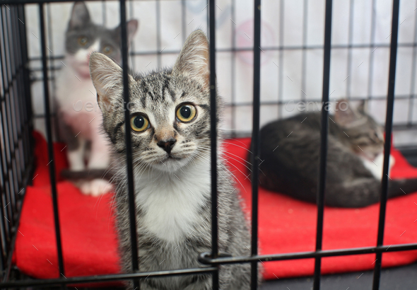 Little homeless kittens in the cage - Stock Photo - Images