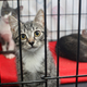 Little homeless kittens in the cage - PhotoDune Item for Sale