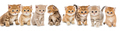 Portraits of a large group of small kittens - PhotoDune Item for Sale
