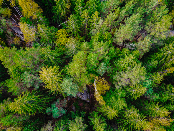 Top down aerial drone image of a forest. - Stock Photo - Images