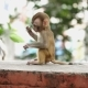 Monkey Cub on a Brick Wall. - VideoHive Item for Sale
