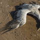 Dead animal due to vulcaninc gas pollution - PhotoDune Item for Sale