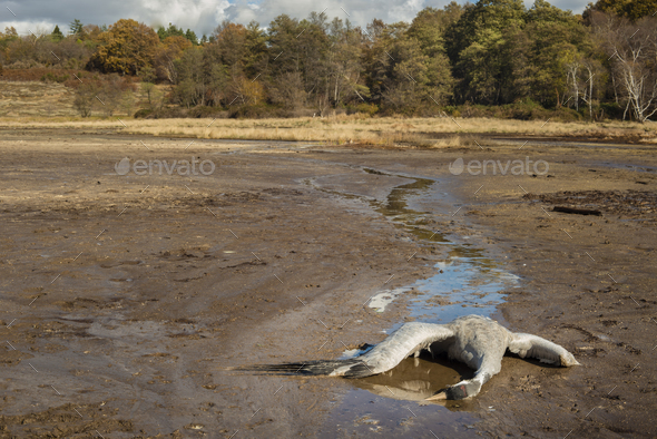 Dead animal due to vulcaninc gas pollution - Stock Photo - Images