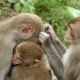 A Family of Monkeys in the Wild Jungle. - VideoHive Item for Sale