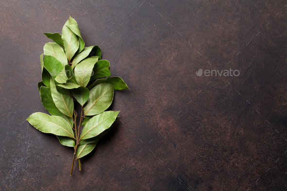 Bay leaves herbs - Stock Photo - Images