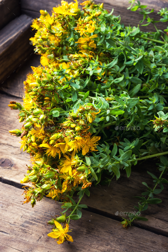 bouquet blooming medicinal herb - Stock Photo - Images