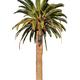 Palm tree on white background - PhotoDune Item for Sale