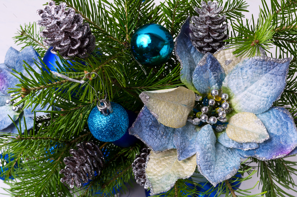 Christmas arrangement with fir branches and blue silk poinsettia - Stock Photo - Images