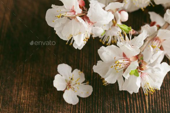Sakura - Stock Photo - Images