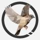 SparroworksDesignCo