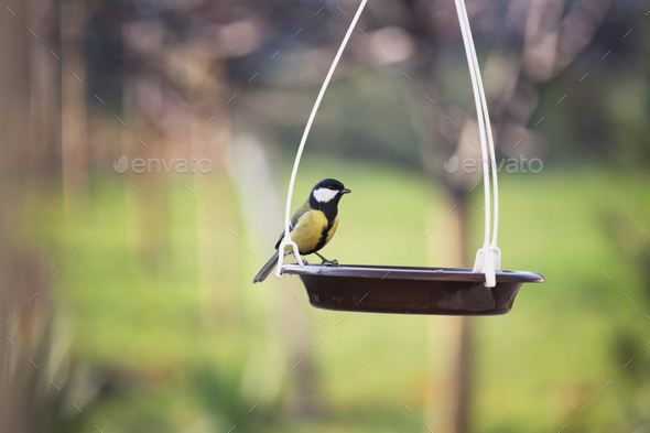 Titmouse - Stock Photo - Images