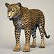 Photorealistic Wild Leopard - 3DOcean Item for Sale