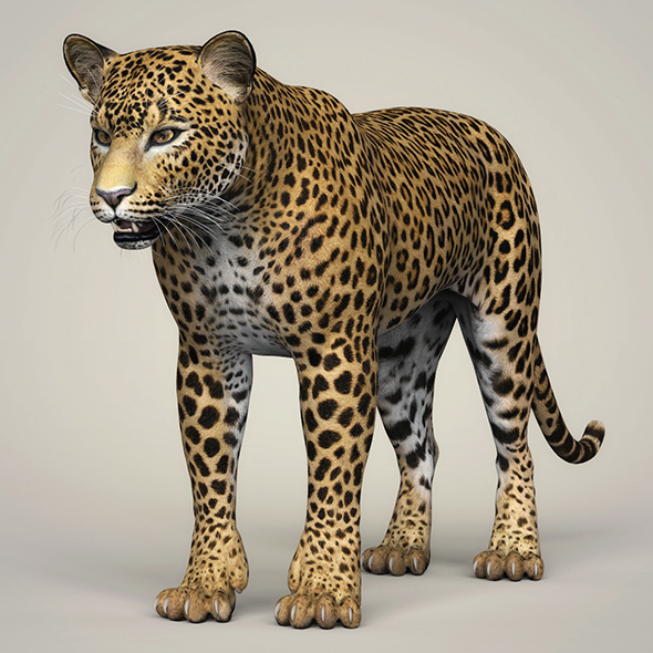 3DOcean Photorealistic Wild Leopard 21112809
