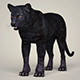Photorealistic Wild Panther - 3DOcean Item for Sale