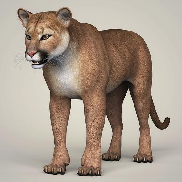 3DOcean Photorealistic Wild Cougar 21112824