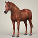 Photorealistic Brown Horse - 3DOcean Item for Sale