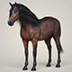 Photorealistic Horse - 3DOcean Item for Sale