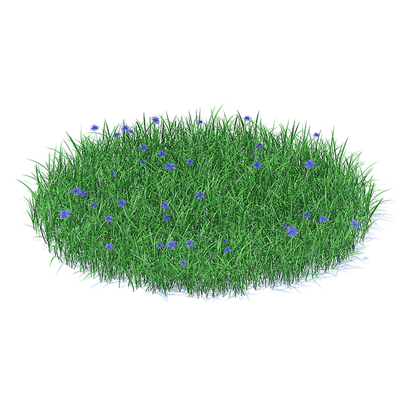 3DOcean Grass with Cornflowers 3D Model 21112974