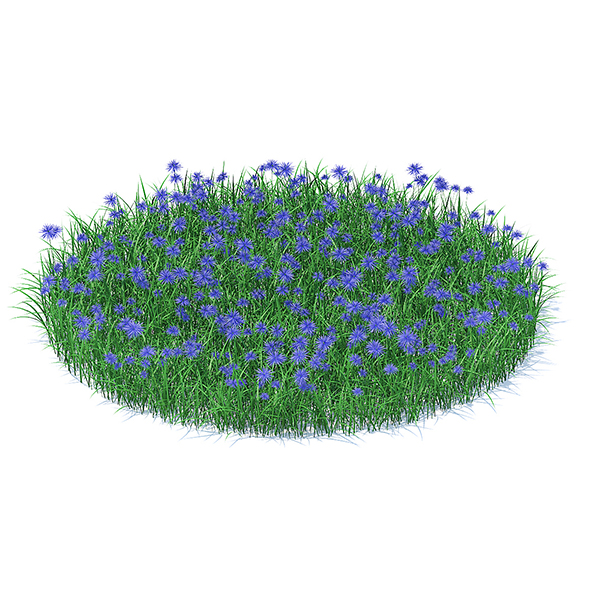 3DOcean Grass with Cornflowers 3D Model 21112990