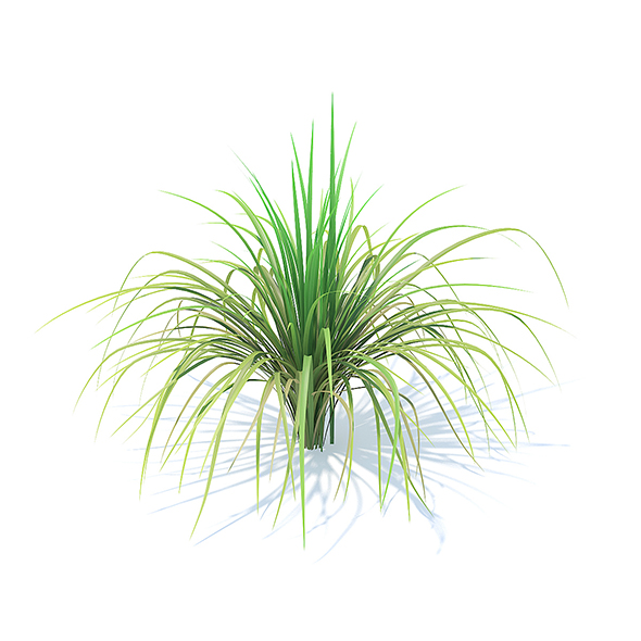 Tall Grass 3D Model - 3DOcean Item for Sale