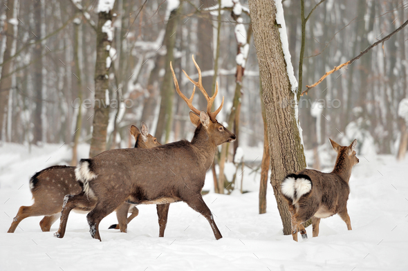 Deer in winter time - Stock Photo - Images