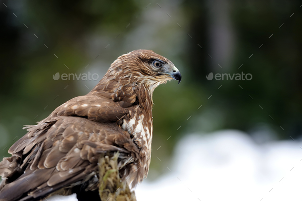 Hawn on a branch - Stock Photo - Images