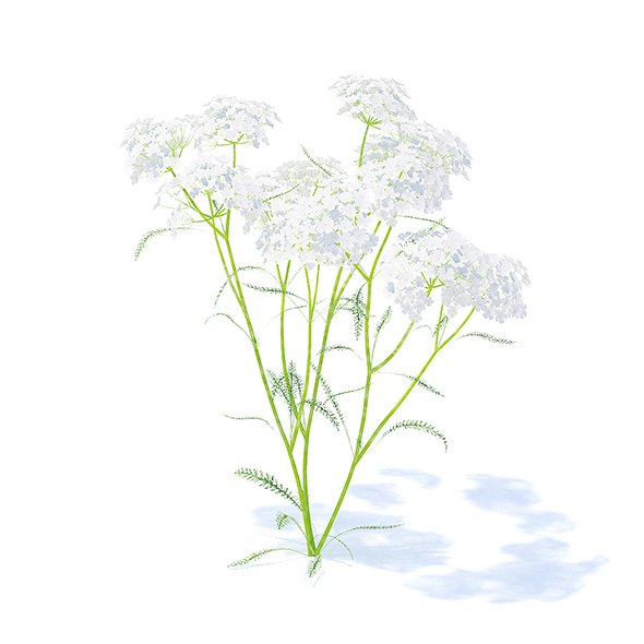 3DOcean Yarrow 3D Model 21113246