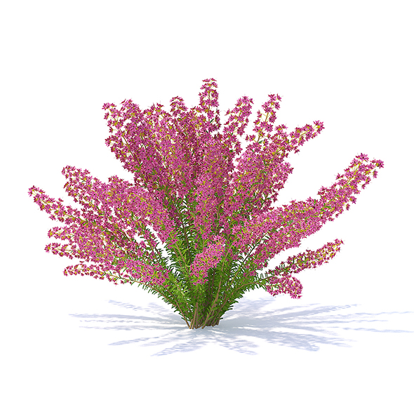 3DOcean Heather 3D Model 21113289
