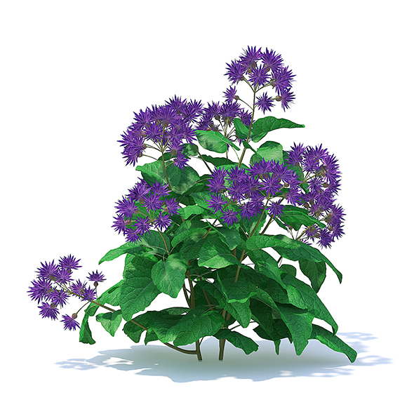 Thistle 3D Model - 3DOcean Item for Sale