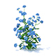 Woodland Forget-me-not 3D Model - 3DOcean Item for Sale