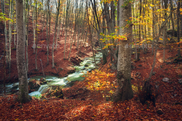 Beautiful autumn forest with river in crimean mountains at sunse - Stock Photo - Images