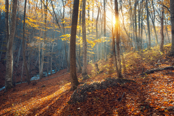 Beautiful autumn forest in crimean mountains at sunset. Nature - Stock Photo - Images