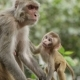 Female Monkey with Cub - VideoHive Item for Sale