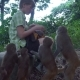 The Girl Feeds Wild Monkeys - VideoHive Item for Sale