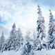 Christmas winter landscape with snow covered trees and majestic lights - PhotoDune Item for Sale