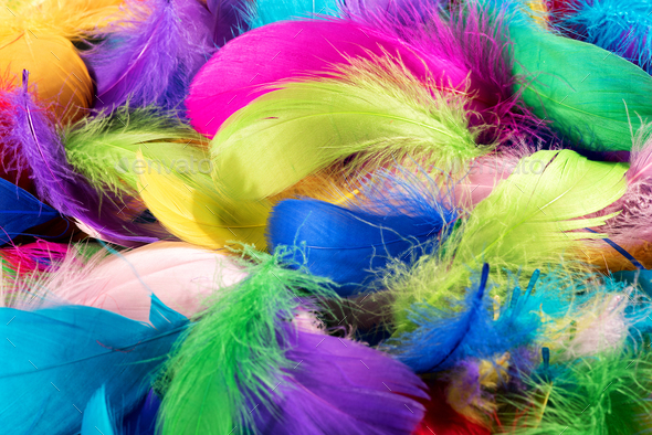 Background texture of colorful dyed bird feathers - Stock Photo - Images