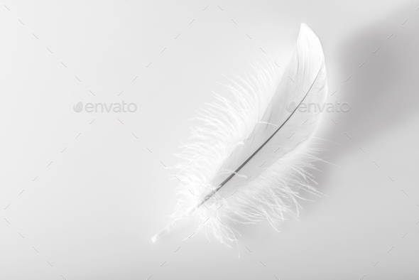 Single delicate fluffy white bird feather - Stock Photo - Images