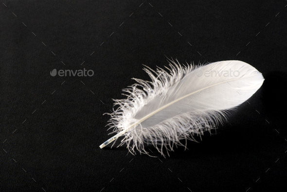 Small fluffy white single bird feather on black - Stock Photo - Images