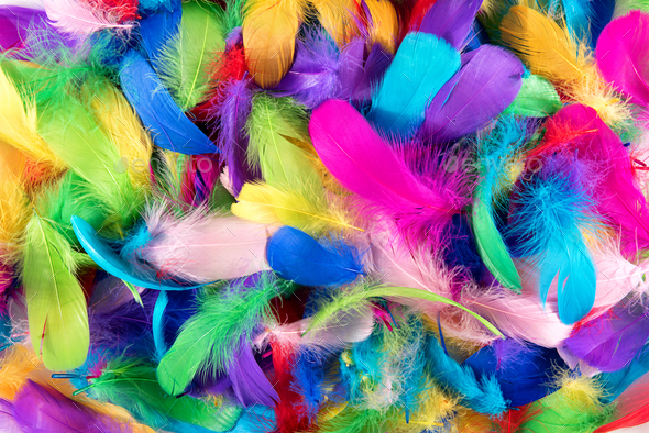 Background texture of brightly colored feathers - Stock Photo - Images
