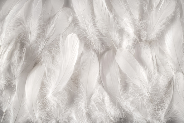 White feathers background - Stock Photo - Images