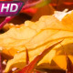 Wet Autumn Leaves - VideoHive Item for Sale