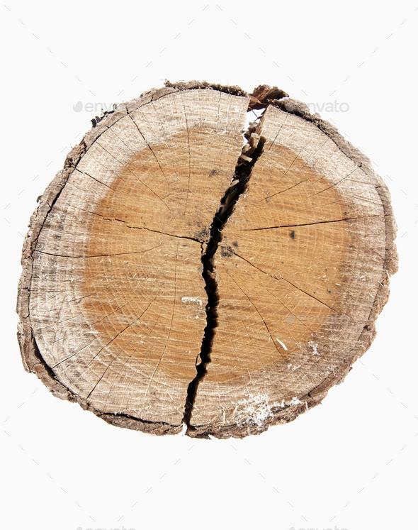 tree stump - Stock Photo - Images
