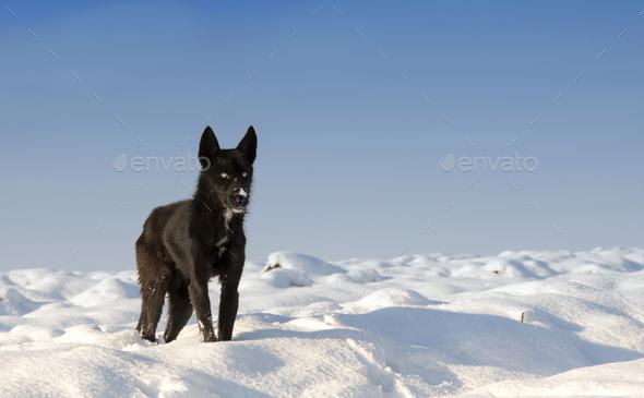black dog - Stock Photo - Images