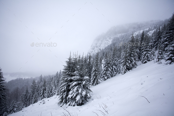 Trees covered with hoarfrost and snow in winter mountains - Chri - Stock Photo - Images