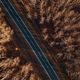 Aerial view of brand new road through autumn forest - PhotoDune Item for Sale