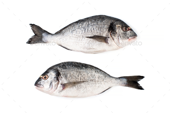 Two fresh Dorado fish on a white background. Isolated. - Stock Photo - Images