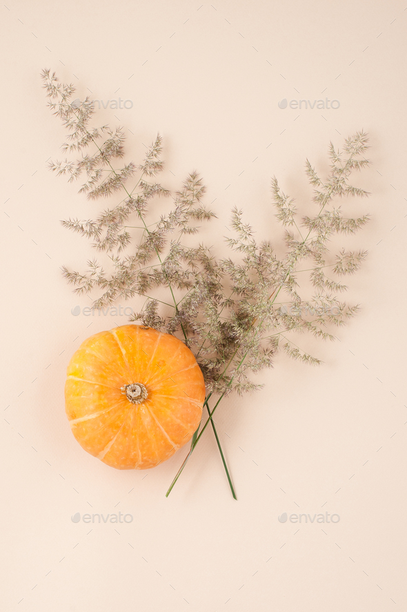 Fresh pumpkin close-up and branches of a dry fluffy plant on a l - Stock Photo - Images