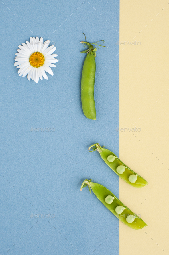 Fresh green peas and a daisy flower on a textured yellow-blue ba - Stock Photo - Images