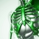 Human Lungs Model with All Organs and Bones - VideoHive Item for Sale